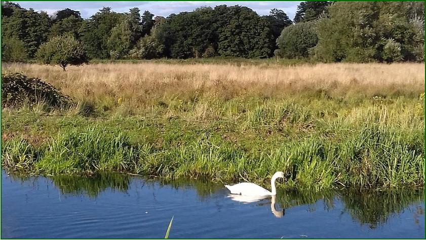 4 Swan