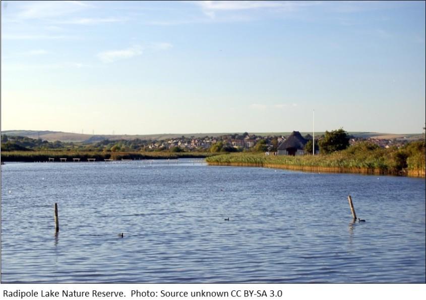 Radipole Lake Wetland Reserve