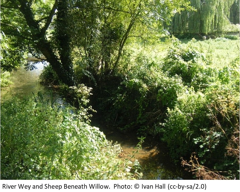 River Wey and Sheep Beneath Willow