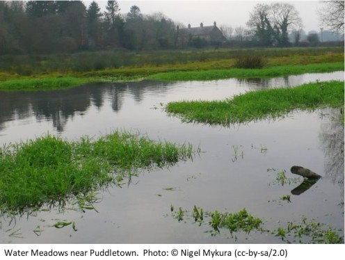 Water Meadows near Puddletown