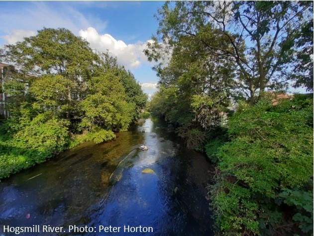 Hogsmill River.jpg