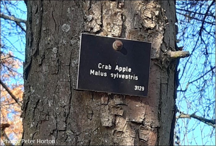Crab Apple tree sign