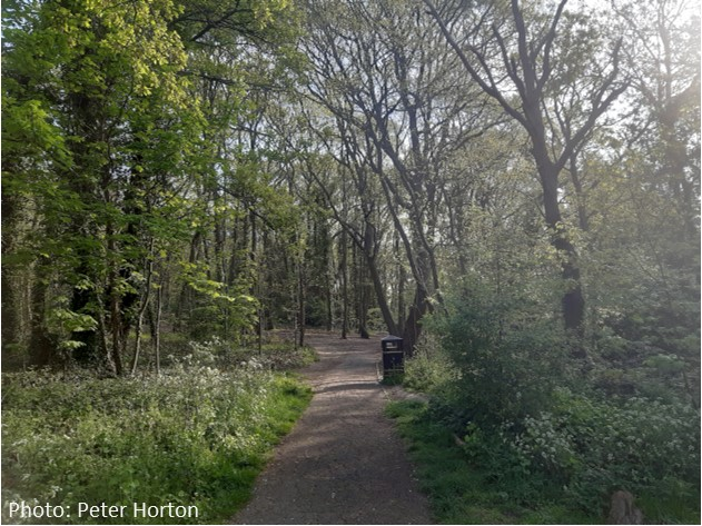 Biggin Wood