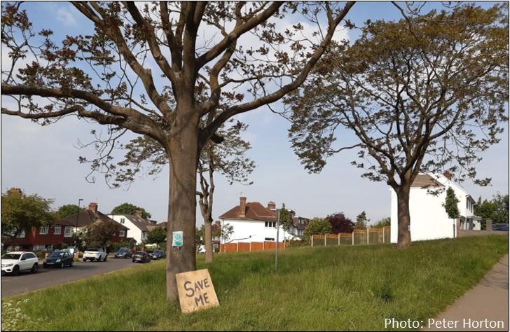 Save Me Tree