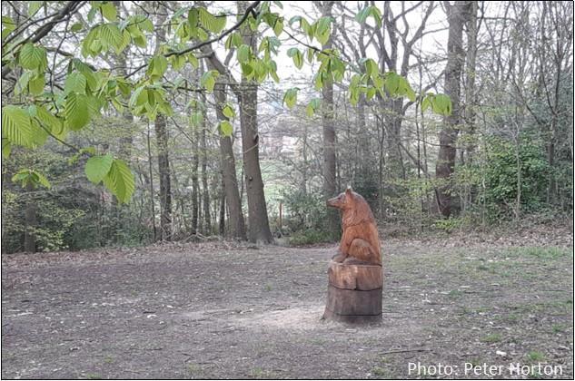 Spa Wood