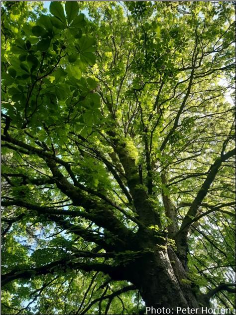Stambourne Wood