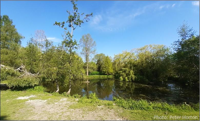 Sydenham Wells Park Pond